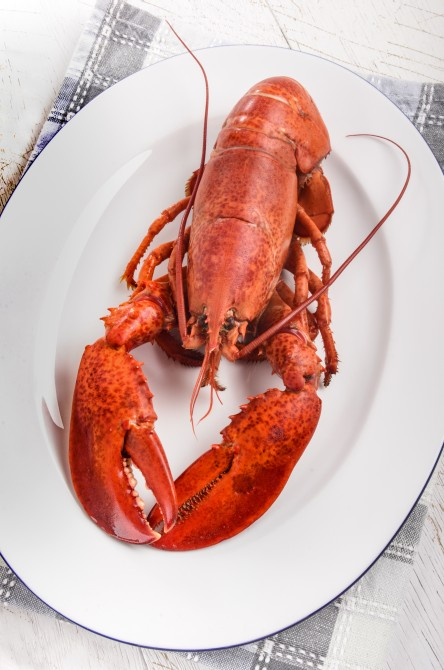 one boiled red lobster on an oval plate